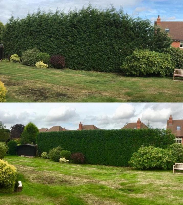 Hedge-trim